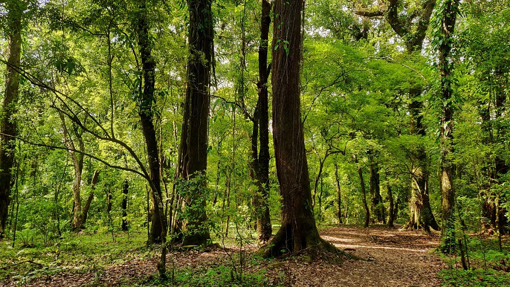 Mawphlang Sacred Forest: A must-visit place in Meghalaya