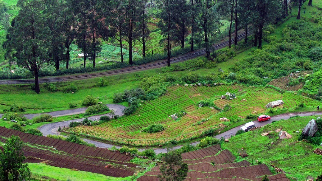Ooty is one of the Best Places to Visit in the Summer in India