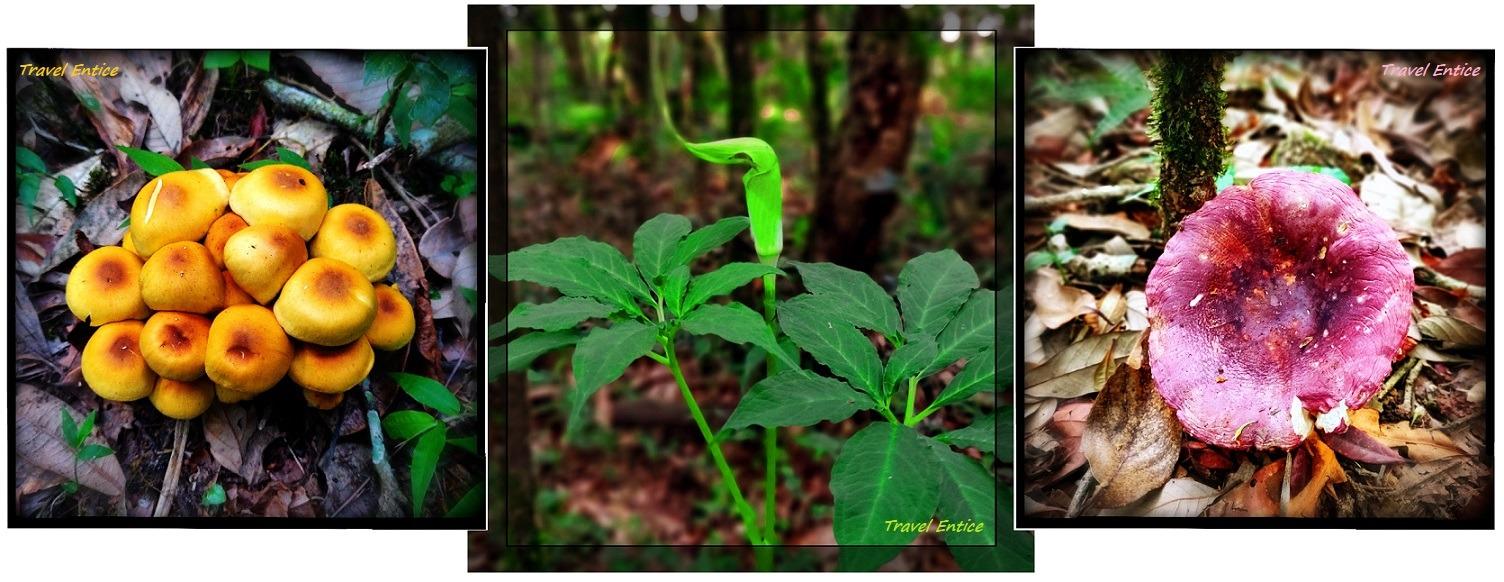 plants inside Mawphlang sacred forest
