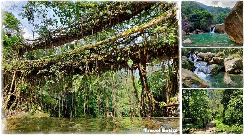 Double Decker Root Bridge – An Awesome Trekking Experience into the Forest of Cherrapunji