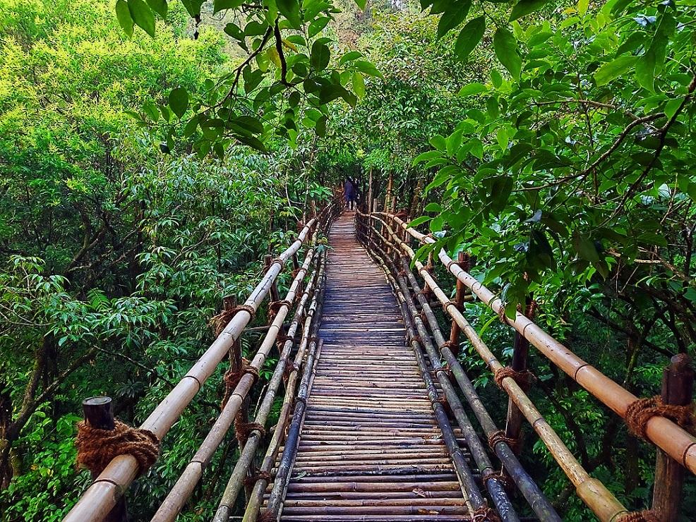 Garden of Caves - Bamboo Bridge