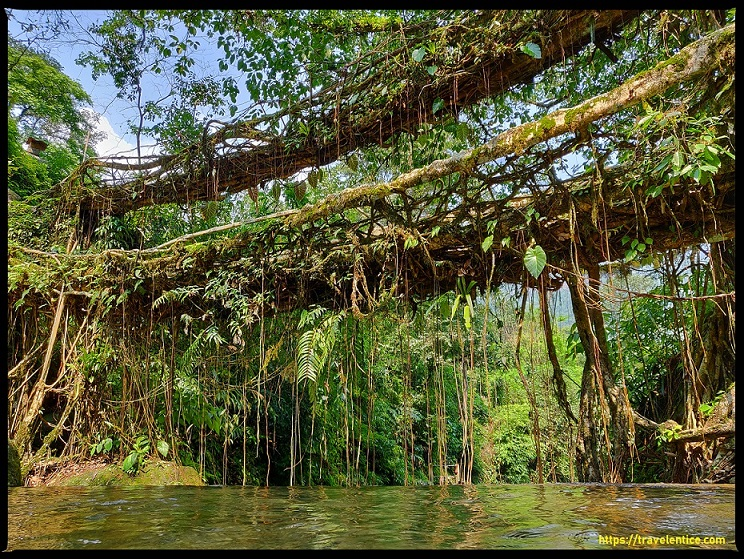 Cherrapunji Tourist Places - Double Decker Root Bridge