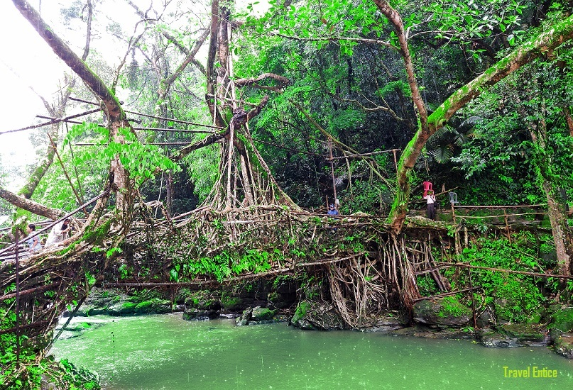 Nohwet living root bridge at Mawlynnong