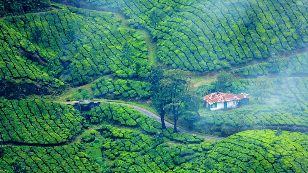 Read more about the article Munnar Tourist Places: 12 Best Places to Visit in Munnar Hill Station, India
