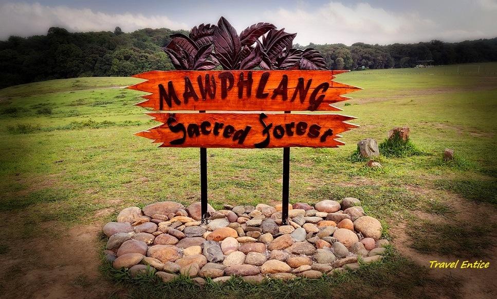 Mawphlang Sacred forest1.