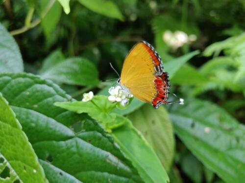 4. beautiful butterfly on the way
