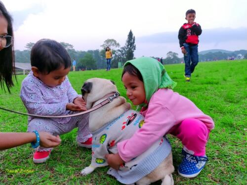 Best places to visit in Shillong - at Golf course with dog 2
