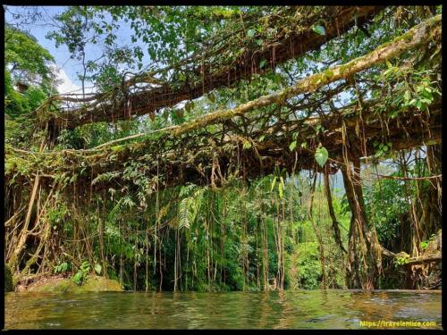 Double Decker Root Bridge – An Awesome Trekking Experience into the Forest of Cherrapunji.
