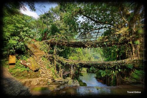 Double Decker Root Bridge –