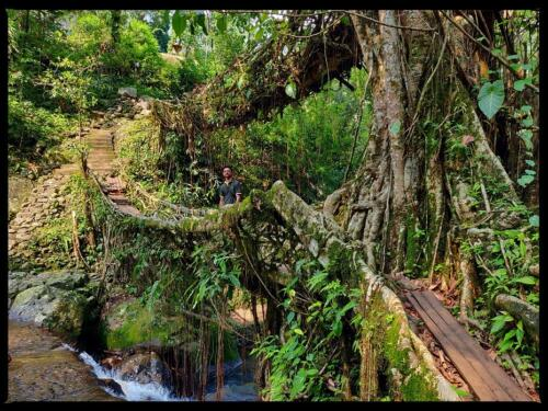 No reason to miss a snapshot with Double Decker Root Bridge.