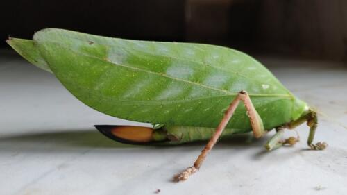 Typical insect we find at Dawki in Meghalaya